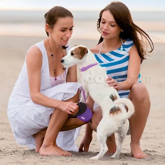 Rejse med hunden