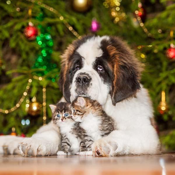 Jul og nytår med hunden