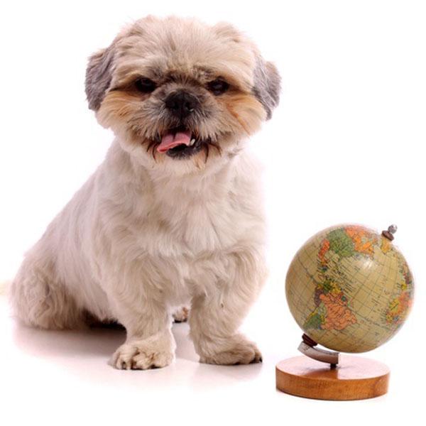 Nyheder hund