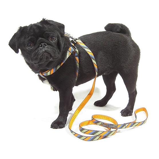 Billede af Hundehalsbånd Candy Stripe