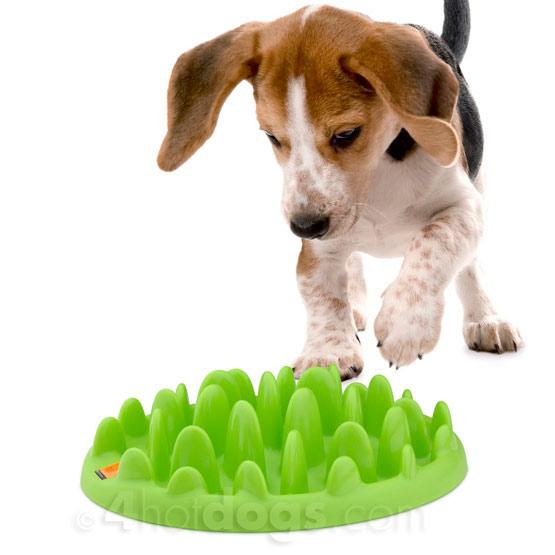 Image of Green Slow Eating hundeskål - Mini