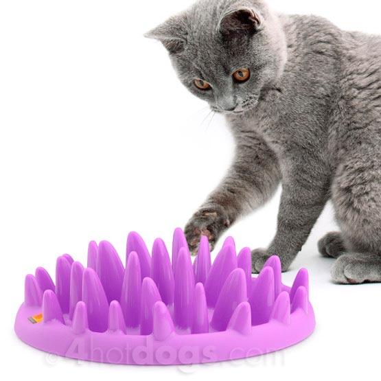 Billede af CATCH- activeringslevetøj til katte