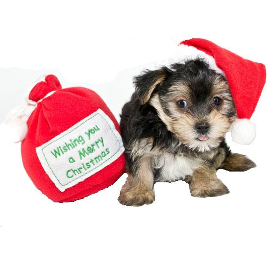 Image of   Adventspakken til hunden