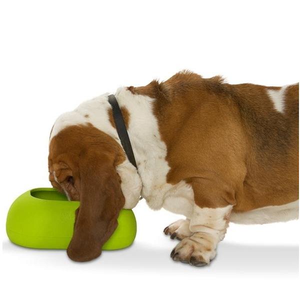 BUSTER IncrediBowl Hund