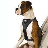 Sikkerhedsudstyr til hunde