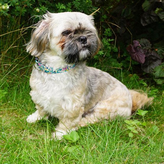 Hundefoder til Shih Tzu