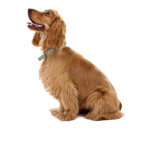 Hundefoder til Cocker Spaniel