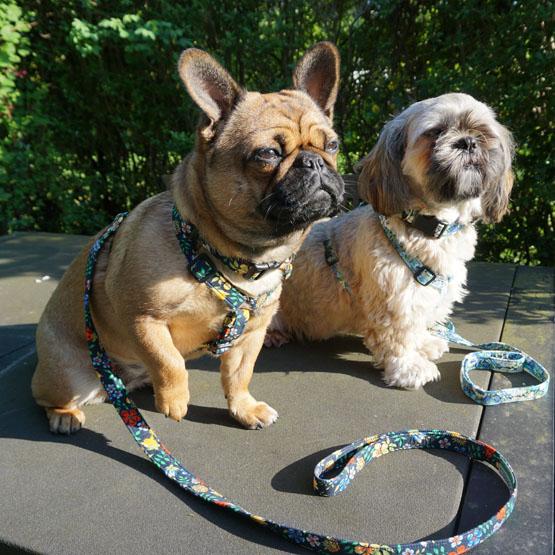 Hundefoder efter hunderace